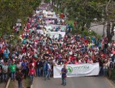 LOS PLANES DE SUSTITUCIÓN NECESITAN 2,5 BILLONES EN 2019 Y PLANES REGIONALES DE DESARROLLO HUMANO