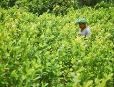 La experiencia de Colombia en materia de política de drogas en la última década