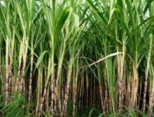 Transformaciones territoriales producidas por la agroindustria de la caña de azúcar en las comunidades étnicas de López Adentro y El Tiple, Colombia