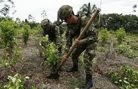 Boletín Acpaz – Indepaz: La erradicación forzada de coca es una farsa