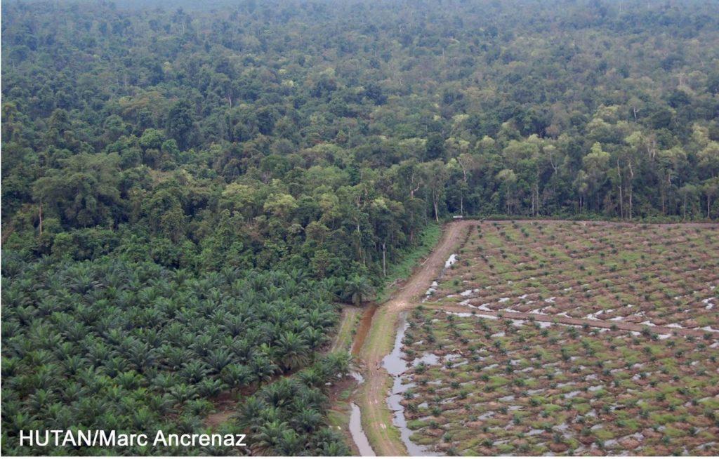 Procedimiento de nuevas plantaciones